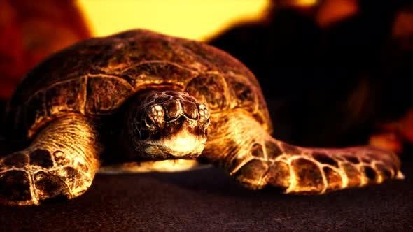 Thumbnail for Sea Turtle at Beach Sand