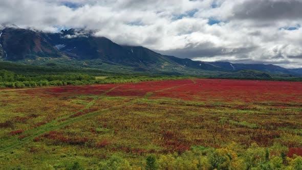 Blühende Weidenröschen in der Nähe von Vachkazhets