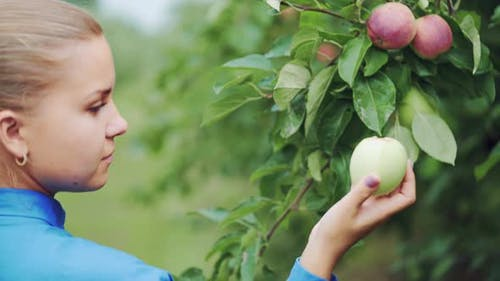 Young Woman is Inspecting and Picking an Ecological Apple