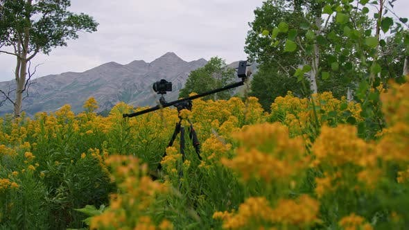 Camera on slider shooting a timelapse in yellow flower field