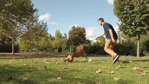 Young man playing and training with a dog. Brown boxer dog
