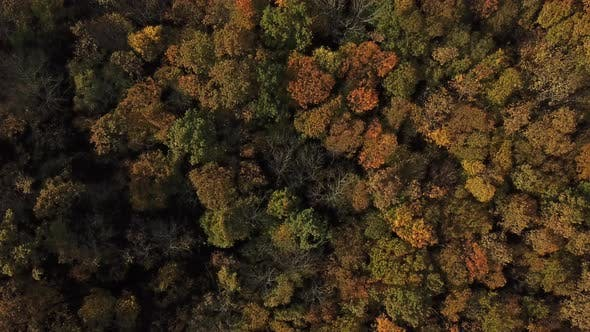 Thumbnail for Aerial Top View of Autumn Trees in Forest Background, Caucasus, Russia