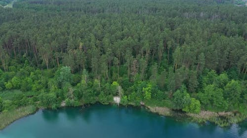 Aerial View Lake Shore Forest