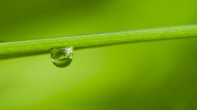 Dew Drops on the Grass