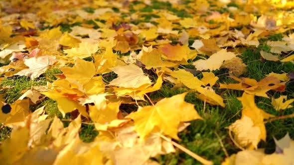 Thumbnail for Falling Autumn Leaves