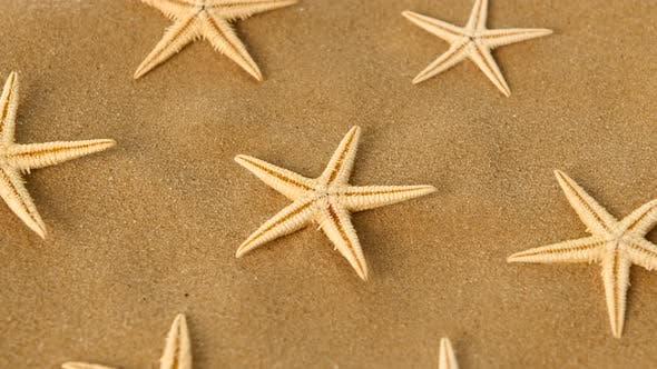 Thumbnail for Big Set of Sea Stars on Sand, Rotation