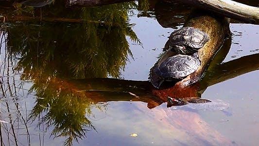 Thumbnail for Turtles & Lake 1
