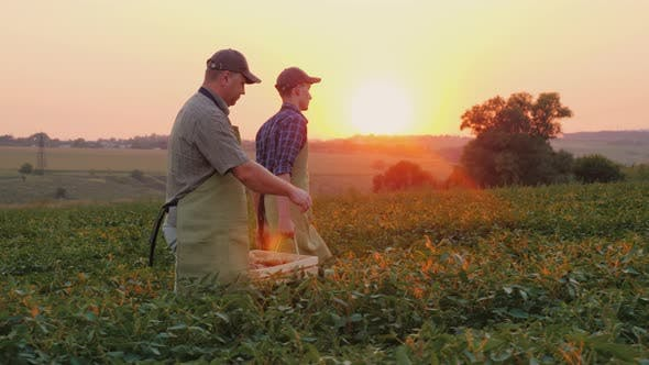 Thumbnail for Father Farmer and Son Together Carry a Box with a Crop on the Field