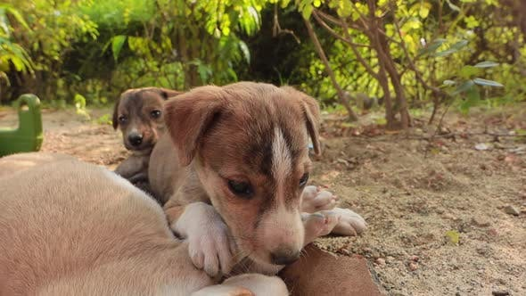 Homeless Puppies on the Streets of the City