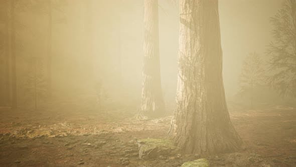 Cover Image for Autumn Forest and Trees in Morning Fog