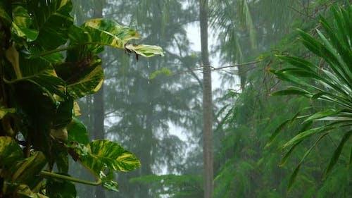 Tropical Downpour,