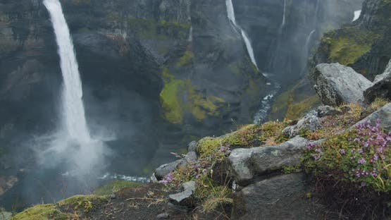 Iceland Haifoss Waterfall with Highland Flowers in Foreground