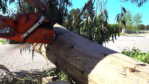 Thumbnail for Man Working with Chainsaw