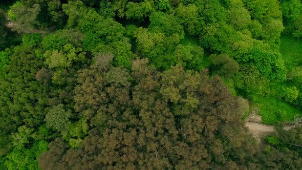 Drone Flying Above on Upper Branches of Forest