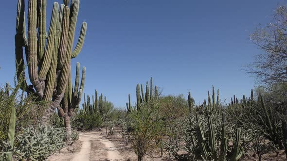 Thumbnail for Desert Baja Peninsula Trail Two-track Road in Mexico