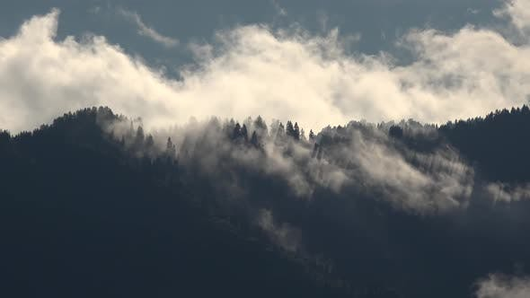 Thumbnail for Clouds Between the Trees in the Wild Dense Forest at Mountain Ridge