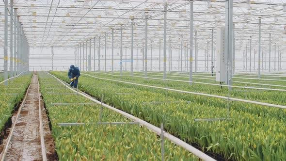 Biochemist Spraying Chemicals on Plants