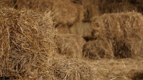 Arranged stacks of baled hay in curing process 4K 2160p 30fps UltraHD tilting footage - Winter anima