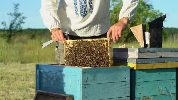 Cover Image for Beekeeper is Working with Bees and Beehives on the Apiary