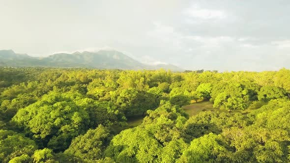 Thumbnail for Aerial View Tropical Orchard with Mango Trees on Mountain and Sky Landscape. Drone View Green Mango