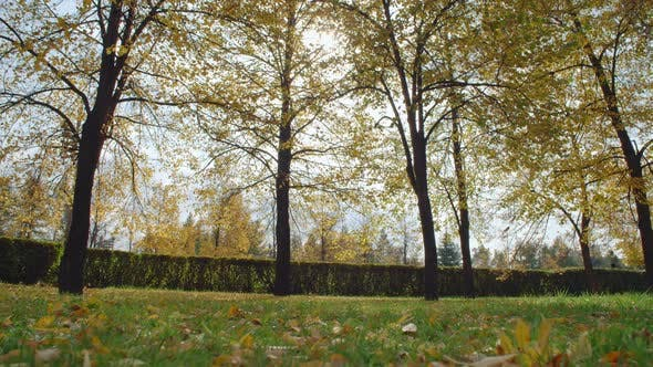 Cover Image for Tranquil View of Leaves Falling from Trees