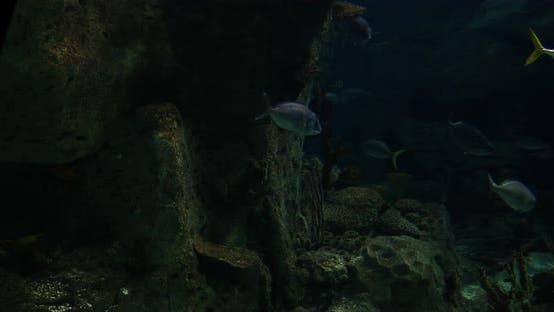 Thumbnail for Aquarium Fish
