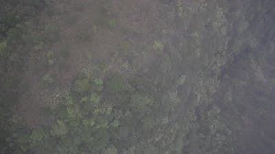 bird eye view of tropical forest