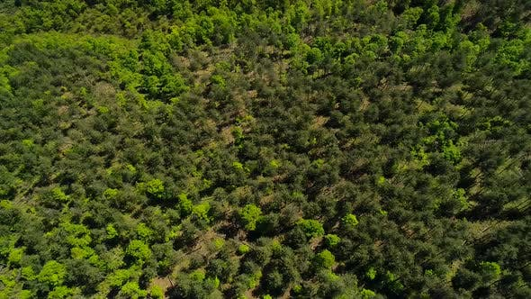 Thumbnail for Aerial View Forest