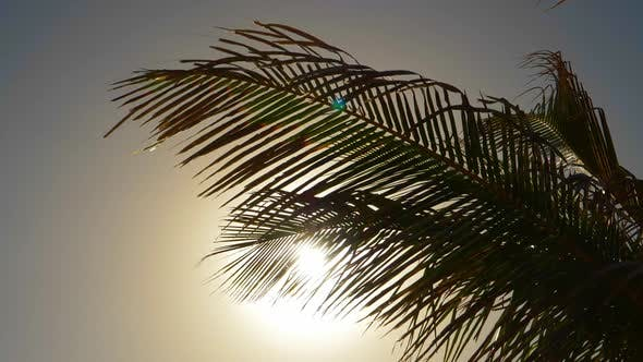 Thumbnail for Palm Tree Leaves