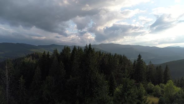 Thumbnail for Forest in the Carpathians Top View