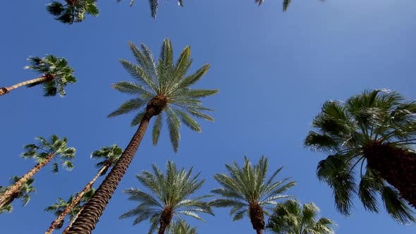Thumbnail for Camera looks up as it moves past rows a palm trees