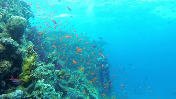 Thumbnail for Scuba Diving. The Underwater World of the Red Sea with Colored Fish and a Coral Reef