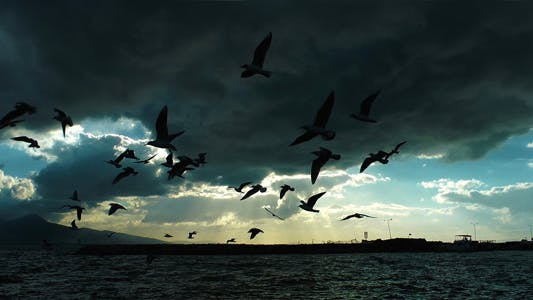Thumbnail for Seagulls Silhouette and Clouds