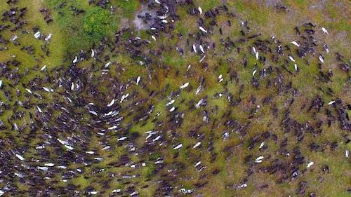 Herd Of Reindeer In Tundra