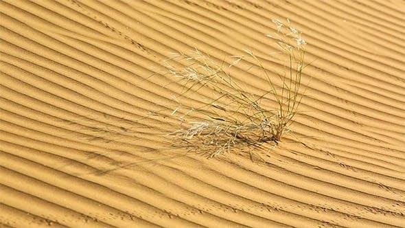 Thumbnail for Desert
