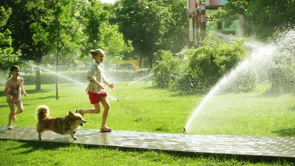Girls Playing With The Dog At The Park