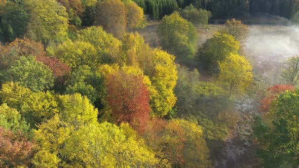 Thumbnail for Aerial View of Colorful Autumn Forest in Morning