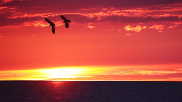 Thumbnail for Sunset over Sea and Birds