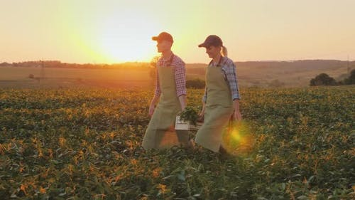 A Woman and a Man Were Carrying a Box of Vegetables Across the Field