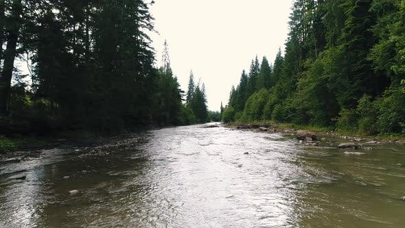Thumbnail for Mountain River Among Coniferous Forest