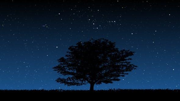 Thumbnail for Tree At Night