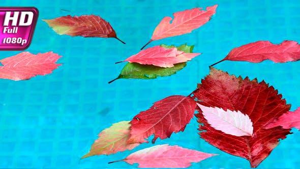 Thumbnail for Bright Autumn