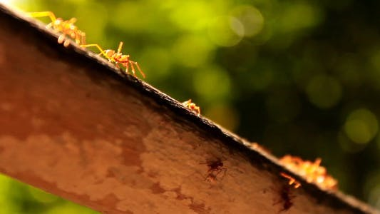 Thumbnail for Ants On A Tree
