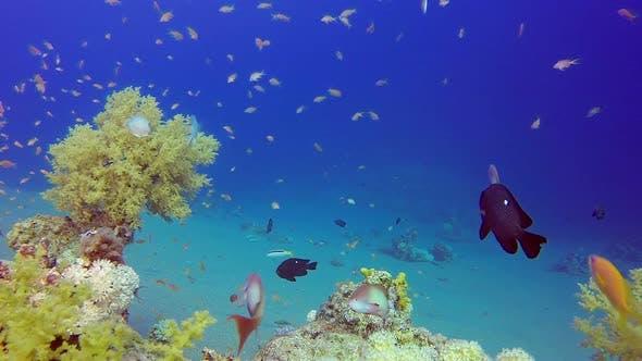 Thumbnail for Beautiful Coral Garden