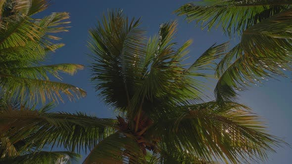 Thumbnail for Palm Trees In The Caribbean Swaying In The Wind On Sunny Day
