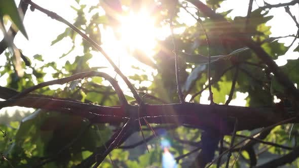 Thumbnail for Leaves Of Trees In A Forest At Sunset