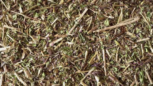 Cover Image for Rotation Medicinal Herbs Oregano
