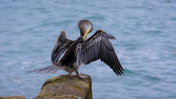 Thumbnail for Der Seevogel sitzt auf einem Stein und reinigt seine Federn mit seinem Schnabel