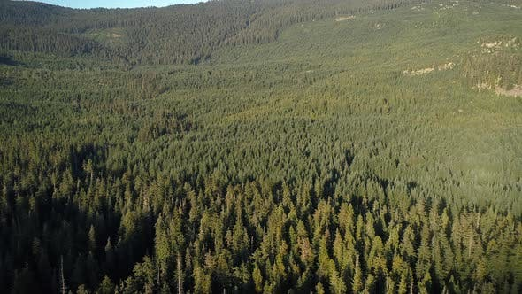 Cover Image for Endless Canopy Of Thick Forest Trees In British Columbia Aerial