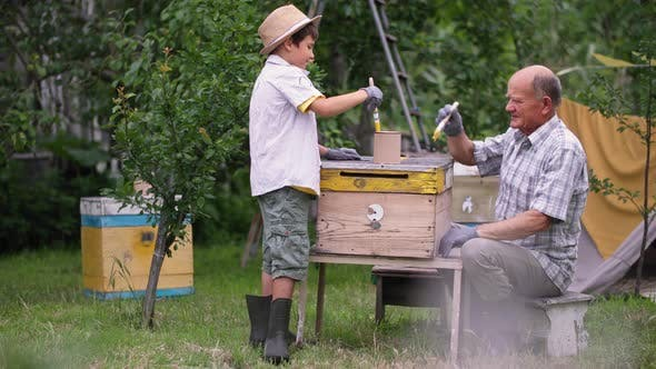 Apiary Caring Grandfather Together with Hardworking Grandson Use Bushes and Paints to Prepare Hives